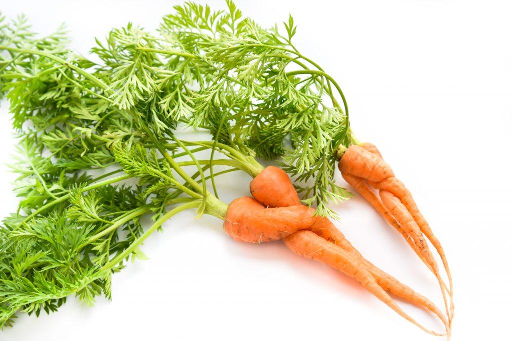Etwa 21 Prozent der gesamten Erntemenge von Karotten bleiben auf dem Feld liegen
